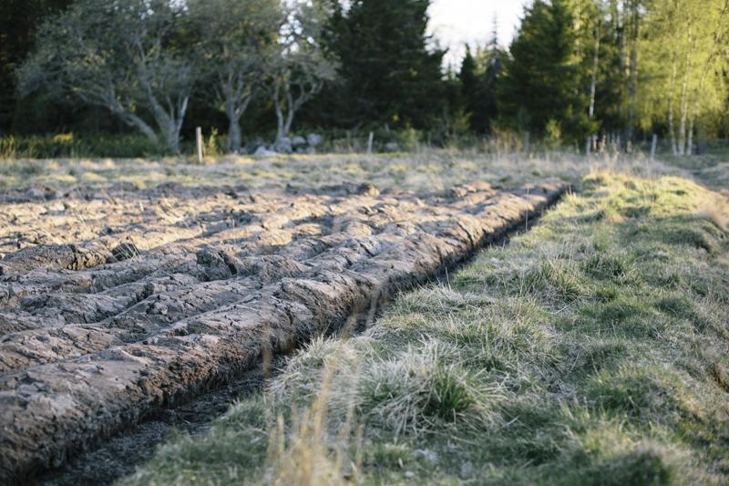 Ett jordbruksnätverk har bildats för att åter bruka marken och börja producera lokalodlade grönsaker. Foto: Alexandra Ellis